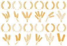 Vete- eller kornöron Skördvetekorn, tillväxtrisstjälk och uppsättning för vektor för brödkorn isolerad stock illustrationer