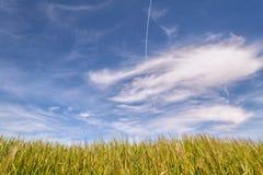 vete för sommar för dagfält varmt Guld- kopia Utrymme för blå himmel Royaltyfri Foto