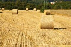 vete för sommar för dagfält varmt Fotografering för Bildbyråer