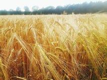 vete för sommar för dagfält varmt arkivbild