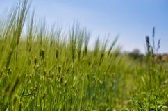 vete för sommar för dagfält varmt Arkivfoton