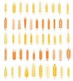 Vete Gå i ax Symboler och Logo Set Natural Product Company och Bruka Företag organiskt vete, brödjordbruk och naturligt äter Royaltyfri Bild