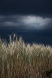 Vete i en storm fotografering för bildbyråer