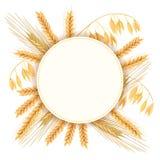 Vete, korn, havre och råg Fyra sädesslagkorn och öron Rund etikett, text arkivbild