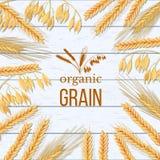 Vete, korn, havren och råg buntar på vit träbakgrund Sädesslagspikelets med organiskt korn för öron, för kärve och för text royaltyfri illustrationer