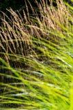 Vete och gräs arkivfoton