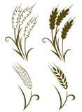 Vete och rye royaltyfri illustrationer