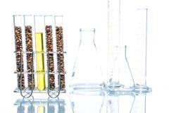 Vete som ändras genetiskt, växtcell Royaltyfri Fotografi