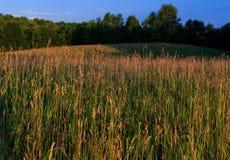 Vete som blåser i ett fält i Pennsylvania royaltyfri fotografi