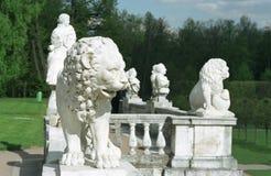 Vetee el león y otro Imágenes de archivo libres de regalías