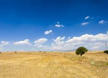 Vetefält Fotografering för Bildbyråer