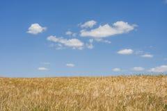 Vetefält Arkivbild