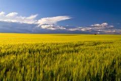 Vetefält, Apulia, Italien Arkivfoton