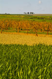 Vetefält, Apulia, Italien Arkivbild