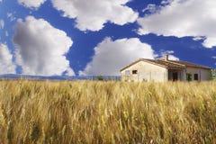 Vetefält, blå himmel, stora moln Arkivfoton