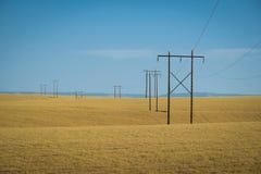 Vetefält, kraftledningar, östliga Washington Royaltyfria Foton
