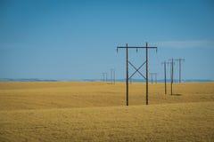 Vetefält, kraftledningar, östliga Washington Arkivbilder