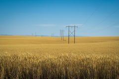 Vetefält, kraftledningar, östliga Washington Royaltyfri Fotografi