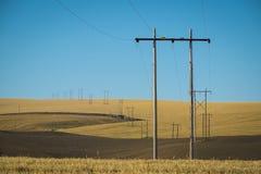 Vetefält, kraftledningar, östliga Washington Arkivbild