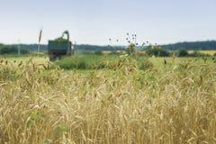 Vetefält, moget korn, rågfält, solig dag, funktionsduglig skördetröska, plockningvetesädesslag i lantgård _ fotografering för bildbyråer