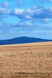 Vetefält mot berg Arkivfoton