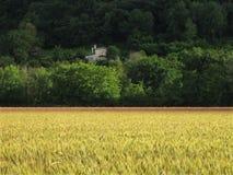 Vetefält och hus Arkivfoto