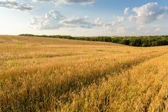 Vetefält och moln Arkivfoto