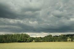Vetefält och stormig himmel Arkivfoton