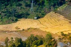 Vetefält på byn av Sikkim, Indien Arkivbild