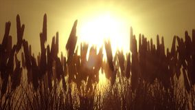 Vetefält på gryning arkivfilmer