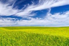 Vetefält på härlig himmelbakgrund Arkivfoton