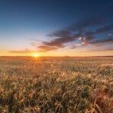 Vetefält på solnedgången Royaltyfria Foton