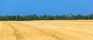 Vetefälten Arkivbild