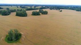 Vetefälten Härligt landskap från en höjd Foto från en höjd Arkivfoton