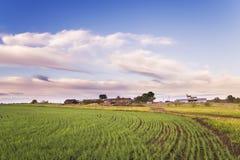 Vetefältet är främst av lantliga hus Arkivbild