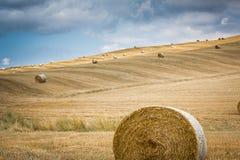 Vetehöbaler vilar på backar i Tuscany arkivbilder