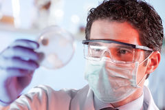 Vetenskaperna om olika organismers beskaffenhetforskare observera celler i den petri maträtten Arkivfoto