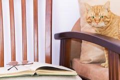 Vetenskaplig katt Arkivfoto