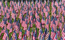 Veterans Day. A public display of flags honoring our veterans stock image