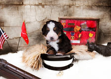 Veterans Day Puppy royalty free stock photography