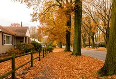 The Veterans of Foreign Wars Parkway in the autumn season. The VFW parkway is simply amazing in the fall or autumn season. The Parkway is lined with beautiful Royalty Free Stock Images