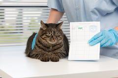 veterinário Fotos de Stock