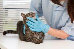 veterinário Fotografia de Stock Royalty Free