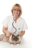 Veterinário com gato Imagens de Stock