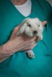 Veterinário com um coelho Fotos de Stock
