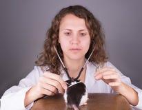 Veterinário da jovem mulher Fotos de Stock