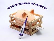 Veterinário do porco imagem de stock royalty free