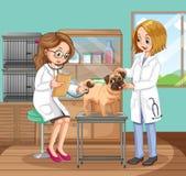 Veterinário Doctors Helping um cão ilustração stock