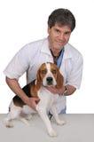 Veterinário e cão Fotos de Stock Royalty Free