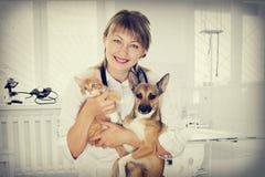 Veterinário e cachorrinho e gatinho na clínica foto de stock royalty free